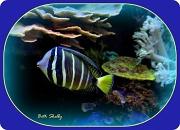 3rd Feb 2012 - Tropical Fish
