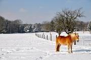 4th Feb 2012 - The mandarine horse