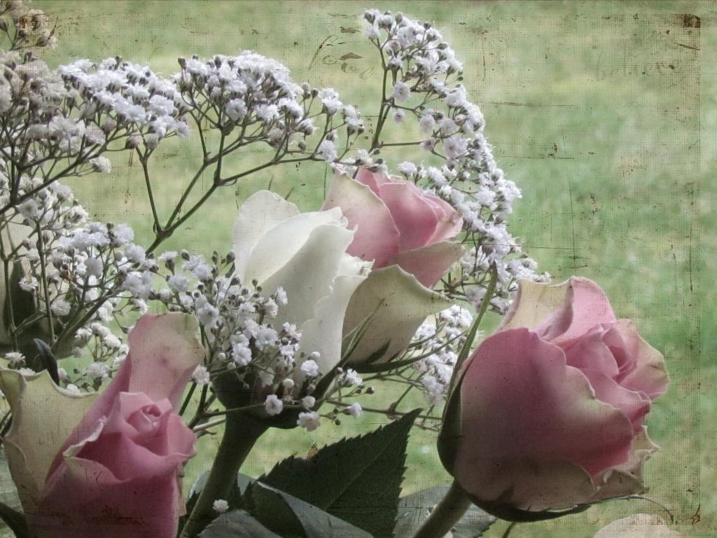 Roses & Gypsophilia by suebarni