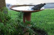 3rd Feb 2012 - 2012 02 03 Birdbath 2