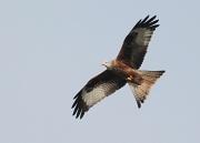 4th Feb 2012 - Kite mark 2