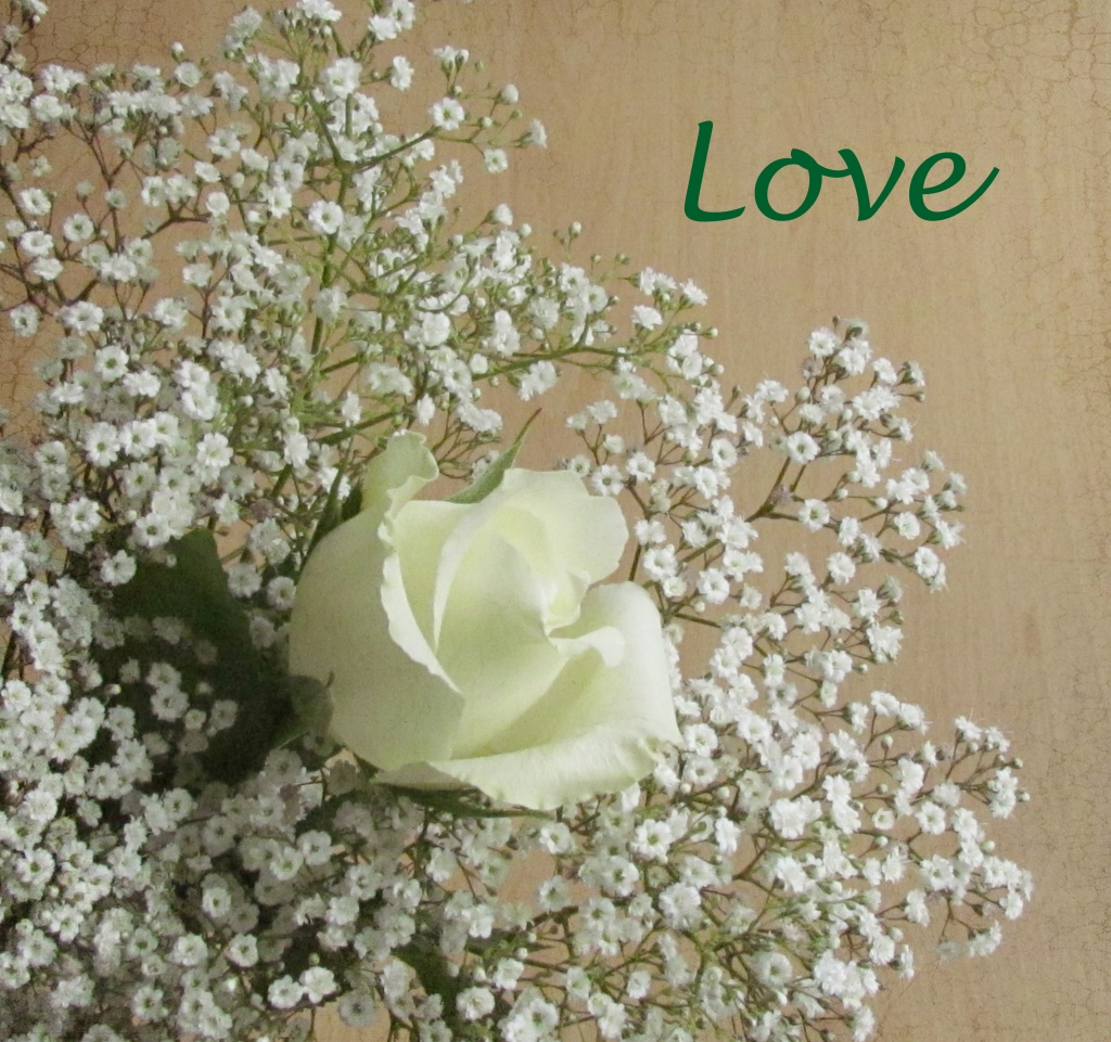 Love by suebarni