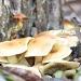 Mushroom Crop by grammyn