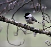 6th Feb 2012 - Chick