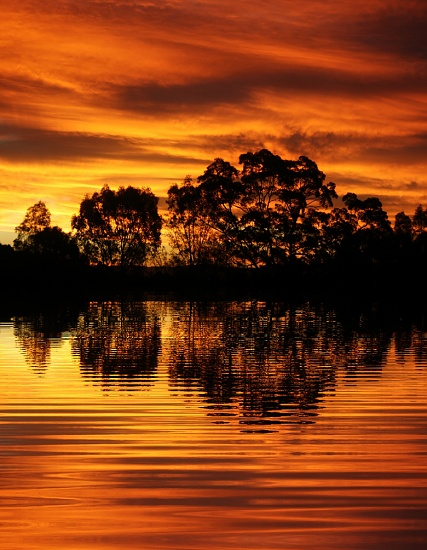 reflections by corymbia