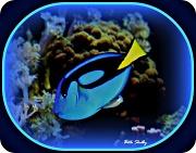 7th Feb 2012 - Blue Fish