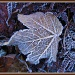 Frosty leaf by jmj