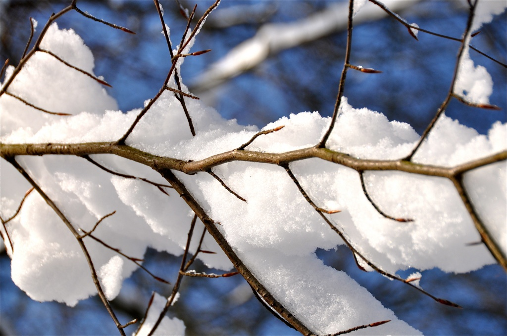 the snow skeleton  by cocobella