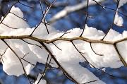 9th Feb 2012 - the snow skeleton