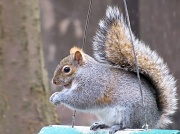 9th Feb 2012 - Squirrely guy.