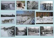12th Feb 2012 - February scenes