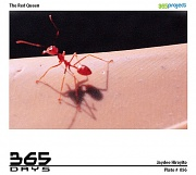 3rd Jun 2010 - The Red Queen