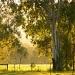 Australian Sunrise by ubobohobo