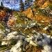 Snowy Pines by exposure4u
