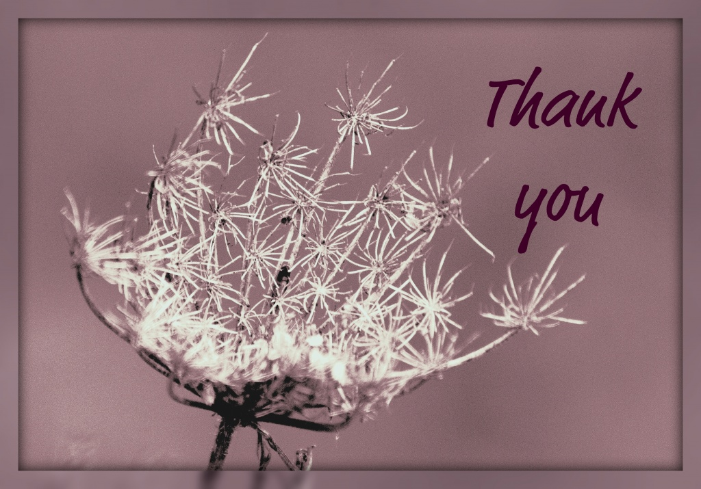 Thank you  by dulciknit