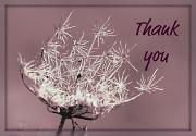 17th Feb 2012 - Thank you