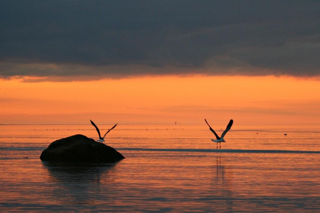 Flying Away by lauriehiggins