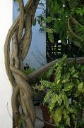 18th Feb 2012 - 2012 02 18 Family Tree
