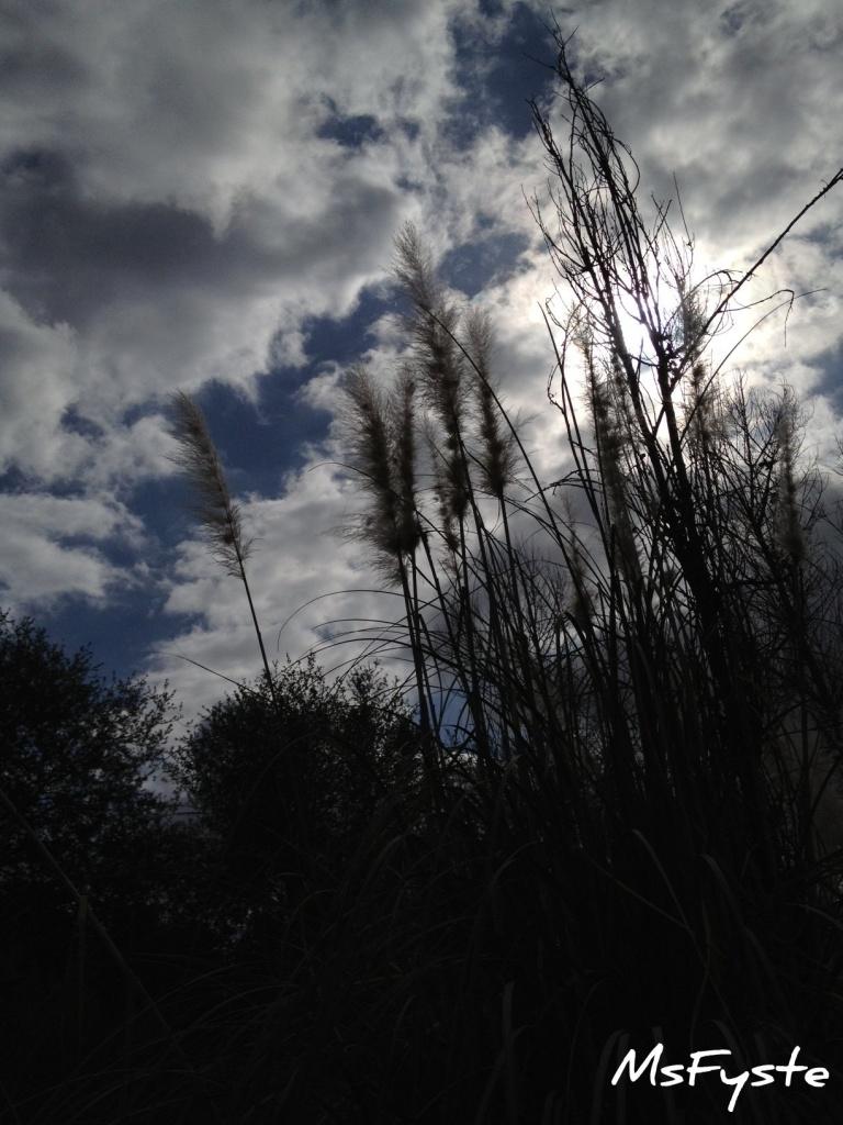 Moody Sky by msfyste
