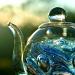 teapot by corymbia