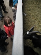18th Feb 2012 - Ruby and the goats