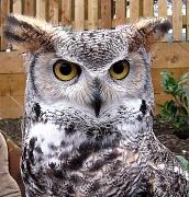 22nd Feb 2012 - owl