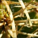 Cactus Needles by salza