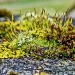 lichen and moss by jantan