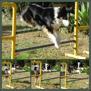 29th Feb 2012 - Ready....Steady....Jump