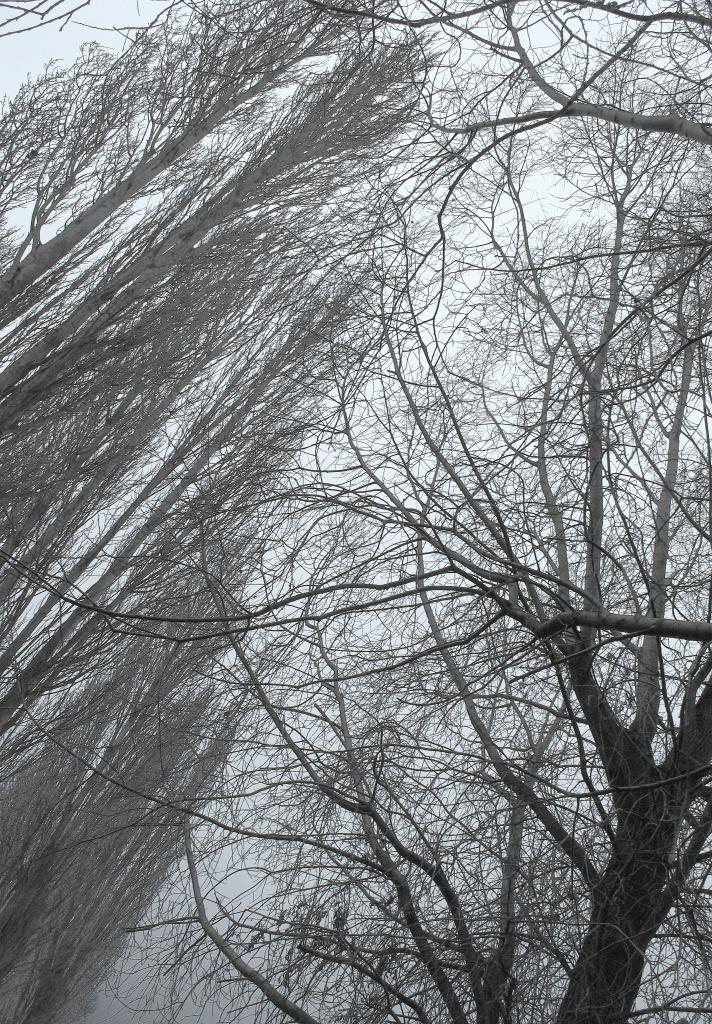 Filigree trees by dulciknit