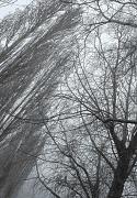 28th Feb 2012 - Filigree trees