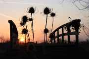 1st Mar 2012 - Teasels in front of bridge at sunset