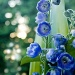 flowers and bokeh by corymbia