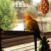 Neighbourhood - March Challenge (with added parrots) by alia_801