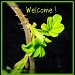 Welcome! by jmj