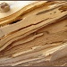 Abstract Wood by olivetreeann