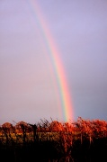 5th Mar 2012 - What's at the end of the rainbow?