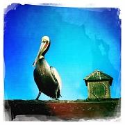 5th Mar 2012 - Close Encounters of the Bird Kind