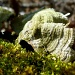 Moss and Fungi by calm