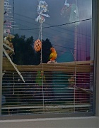 8th Mar 2012 - Window - March challenge (with added parrots)