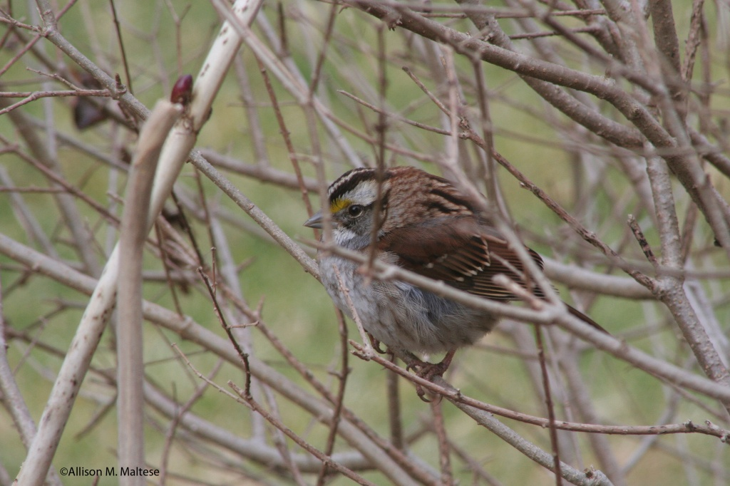 Hiding in Plain Sight by falcon11