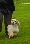 11th Mar 2012 - Dog Show