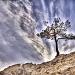 The Lone Tree by exposure4u