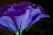 13th Mar 2012 - tears