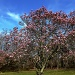 Spring Blossoms by hjbenson