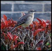 "14th Mar 2012 - ""My favorite weather is bird-chirping weather. ""~Terri Guillemets"