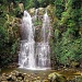 Minnamurra Rainforest by peterdegraaff