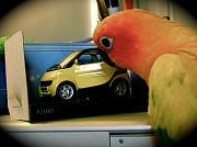 15th Mar 2012 - Car - March challenge (with added parrots)