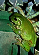 15th Mar 2012 - It's a frog on a pot plant