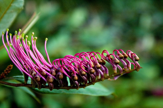 Pink on green by corymbia